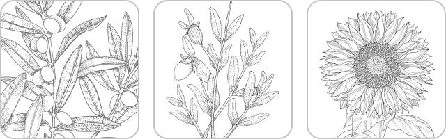 [ オーガニックキャリアオイル ] オリーブオイル・ホホバオイル・ヒマワリオイル(毛髪保護成分・浸透成分・保湿成分)