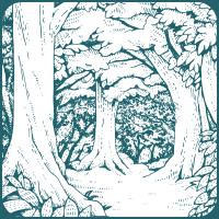 Forest Brown フォレスト、深みのある透明感