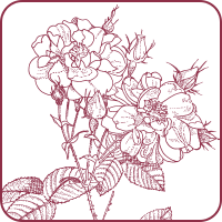 Rose Brown ローズ、甘さと上品さの艶めき